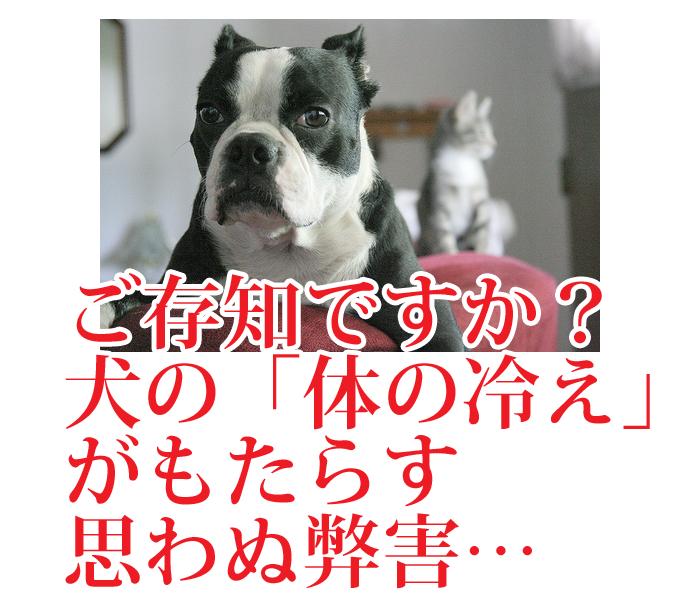 犬の冷え対策